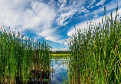 EckFoto New England Nature Photography