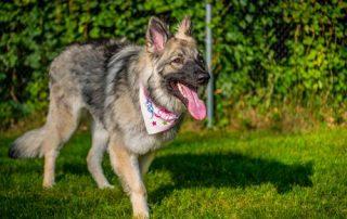 EckFoto Pet Photography