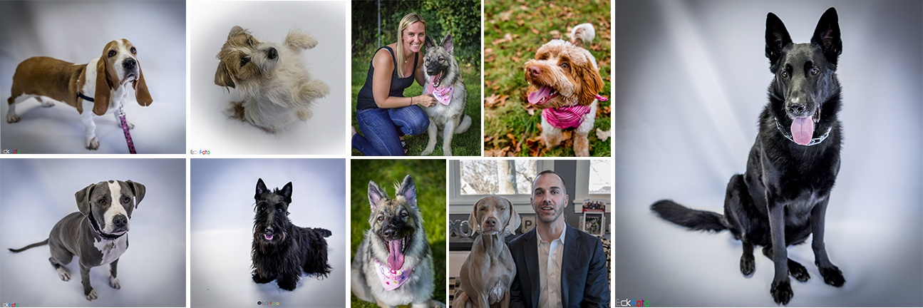 EckFoto Pet Photography Header